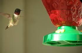 top 10 things you can do to attract hummingbirds bird watcher u0027s