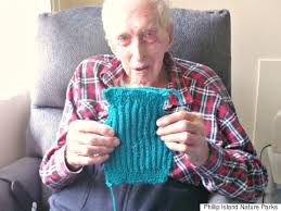 australia s oldest knits tiny sweaters for penguins injured in
