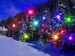 winter winter snow lights snowy tree white trees christmas