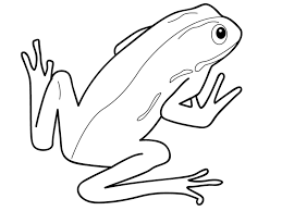 amphibian clipart drawing pencil and in color amphibian clipart