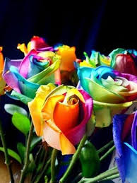 how to enjoy amazing roses of every color rainbow flowers