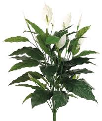 Peace Lily Plant Silk Plants Direct Spathiphyllum Peace Lily Plant Pack Of 6