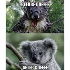 Bear Stuff Meme - evil koala meme google search funny stuff pinterest meme
