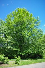 17 floor plan creator app 28 tree gifting trees madhuca the
