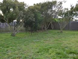 Backyard Shade Trees Beautiful U0027mayberry By The Sea U0027 Author Home Vrbo
