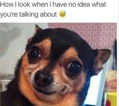 Confused Dog Meme - how i look when i have no idea what you re talking about animal