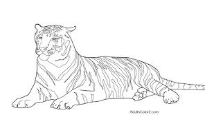 8 images of real tiger coloring pages white tiger coloring pages