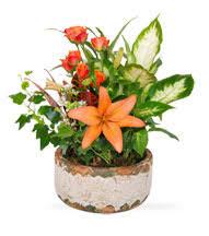 sympathy plants sympathy plants dish gardens peace orchid glenview florist