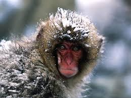 cute monkey animals desktop wallpaper 1600 x 1200 picture 27