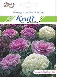 buy ornamental cabbage or kale flower seeds by kraft seeds on