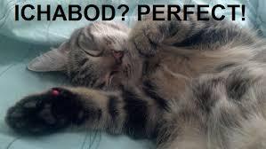 Success Cat Meme - the best literary pet names for cats