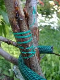 solving fruit tree problems from garden