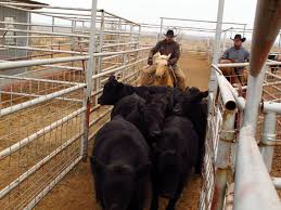 Seeking Ranch Ranchers Seeking Alternative Incomes The San Diego Union