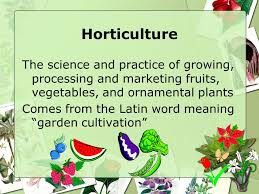 biological terms used to describe plants horticulture i ppt