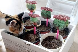 Growing Herbs Inside Impeccable Plants As Wells As Plants In Ikea Hacks Also Ikea Hacks