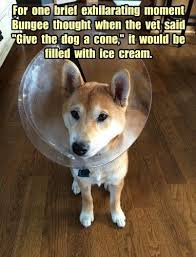 Dog Vet Meme - dog vet meme 28 images 15 times dogs realized they were going