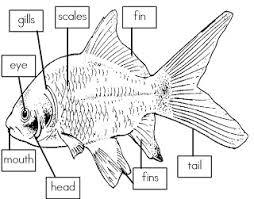 u0027s class label parts fish freebie