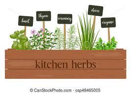 origan en cuisine verdure box affiche horticulture ferme houseplants