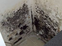 Getting Rid Of Mold In Basement by Mold And Mildew