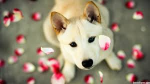 pretty wallpapers for desktop cute wallpapers cute images for wallpaper quote sigma