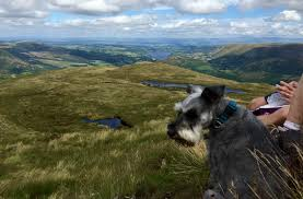 helvellyn country kitchen glenridding the hungry schnauzer