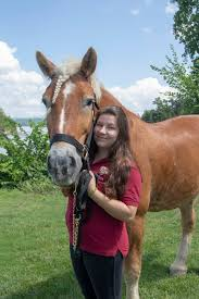 Massachusetts How Far Can A Horse Travel In A Day images Summer horse camps in vermont equine summer camps jpg