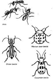 identifying garden pests vegetable gardening