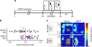3f si e social epigenetic modulation of inflammation and synaptic plasticity
