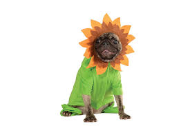 Pet Cat Halloween Costumes Amazon Com Rubie U0027s Pet Costume Medium Sunflower Pet Supplies