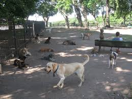 dog friendly off leash parks in the orlando area