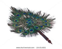 peacock feather fan fan made peacock feathers on white stock photo 104313998