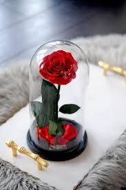 enchanted rose that lasts a year enchanted rose lasts for 1 year one year roses