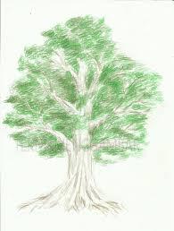 tutorial menggambar orang dengan pensil cara menggambar pohon dengan pensil warna teknik menggambar