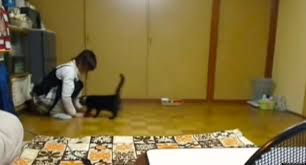 Slippery Floor Slippery Cat U0027 Spins On Floor Has Time Of Its Life Video Huffpost