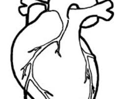 Anatomy Of Human Heart Pdf Human Heart Embroidery Anatomical Line Art Simple Embroidery