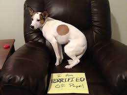 funny animal thanksgiving pictures 155 best funny pet shaming images on pinterest funny pets