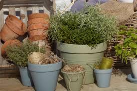 Garden Pots Ideas Garden Pots Gardening Design