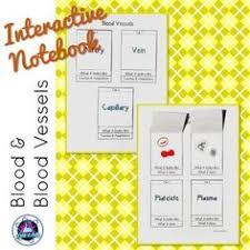 free printable circulatory system worksheets circulatory system