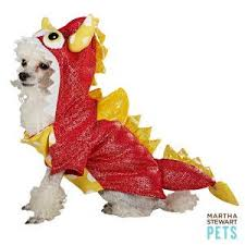 Martha Stewart Dog Halloween Costumes 110 Pet Costume Ideas Images Animals Animal
