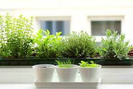 home herb garden 24 indoor herb garden ideas to look for