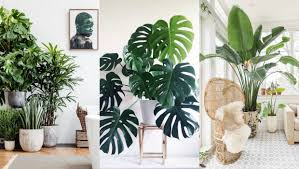 Lifestyle Home Decor A List Of The Best Indoor Plants For Fabulous Home Decor