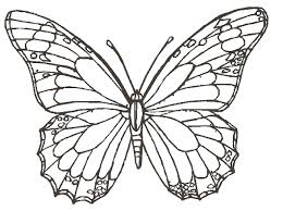 butterfly drawing free download clip art free clip art on