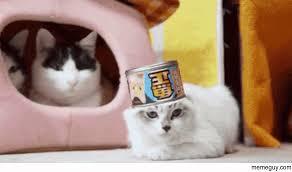 Sassy Cat Meme - sassy cat meme guy