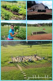 my 5 000 sq ft vegetable garden plan grounded u0026 surrounded