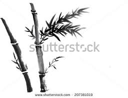 china ink bamboo sketch chinese traditional stock illustration