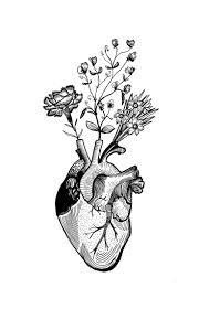 best 25 anatomical heart tattoos ideas only on pinterest