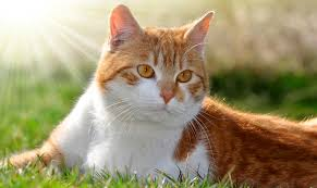 Colorado traveling with cats images Colorado veterinary specialists animal er veterinarian in jpg