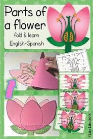 Life Of A Flower - best 25 flower parts ideas on pinterest parts of a flower