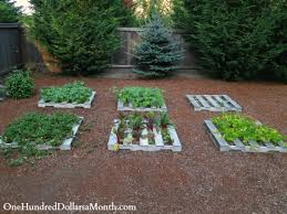 mavis butterfield backyard garden plot pictures u2013 week 31 of 52