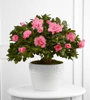 king soopers floral the ftd vibrant sympathy planter flowers king